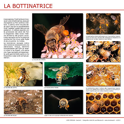 La Bottinatrice
